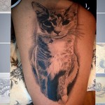 pet, cat, tattoo,